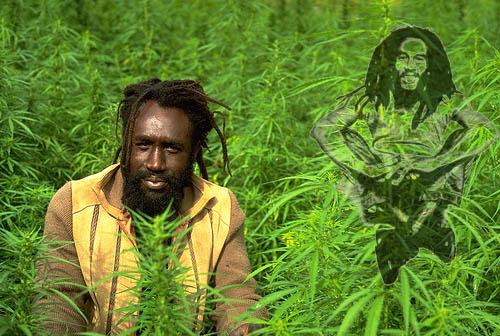 Empresa privada cultivará marihuana en Jamaica para uso medicinal