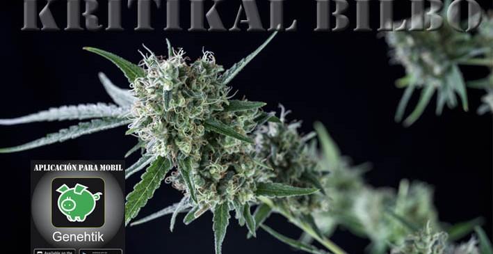 Sube la venta de semillas de marihuana para uso medicinal