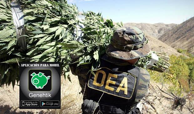 La DEA se retracta sobre comentarios de cannabis