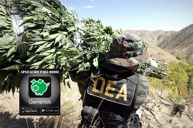 La DEA se retracra sobre comentarios de Cannabis