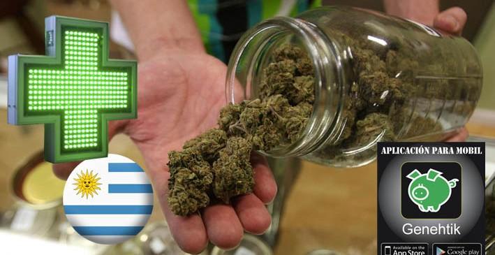 Empieza la venta de marihuana en las farmacias de Uruguay