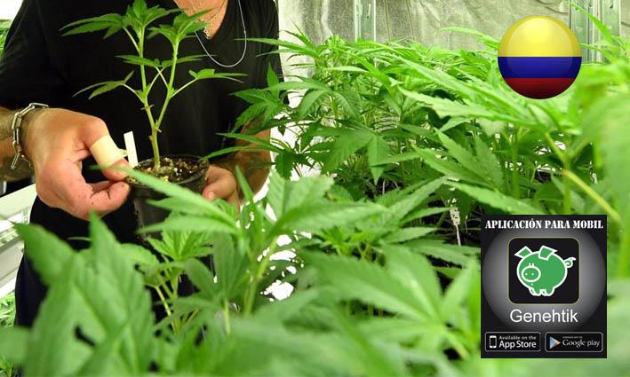 Curso para aptrender a cultivar marihuana en la Universidad de Colombia