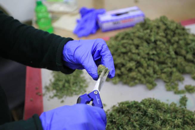 Portugal se convertirá en el mayor productor europeo de cannabis medicinal