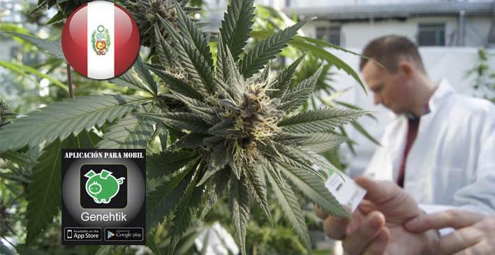 Se aprueba el uso medicinal de cannabis en Perú