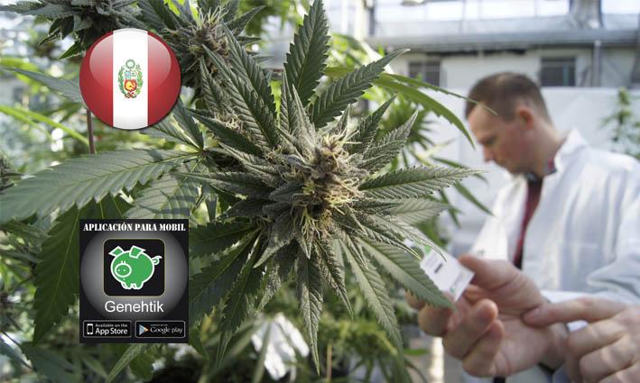 El Congreso aprueba el uso de cannabis medicinal en Perú