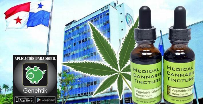 Iniciativa para legalizar la marihuana medicinal en Panamá