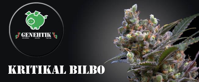Semillas de marihuana Kritikal Bilbo