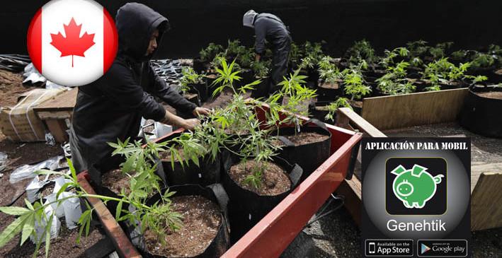 Aprobada ley que legaliza la marihuana recreativa en Canadá