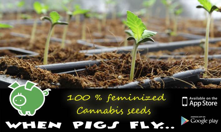 Cannabis seedbank Genehtik History
