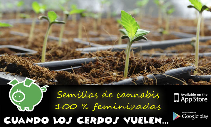 Banco de semillas de cannabis Genehtik