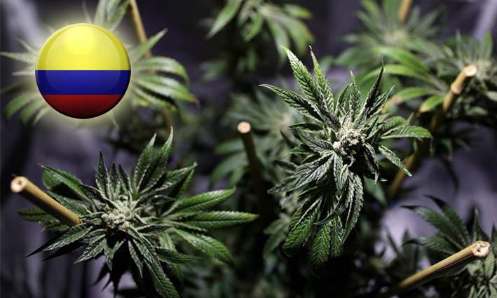Colombia concede la primera licencia para la producción de marihuana medicinal