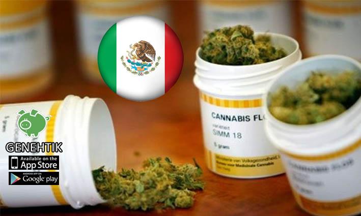 El Senado de México aprueba despenalizar la marihuana medicinal.