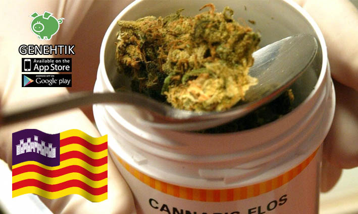 Aprobado el estudio del uso terapéutico del cannabis en Baleares