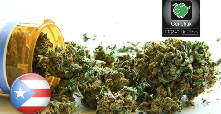 Inician proceso para tratarse con cannabis en Puerto Rico