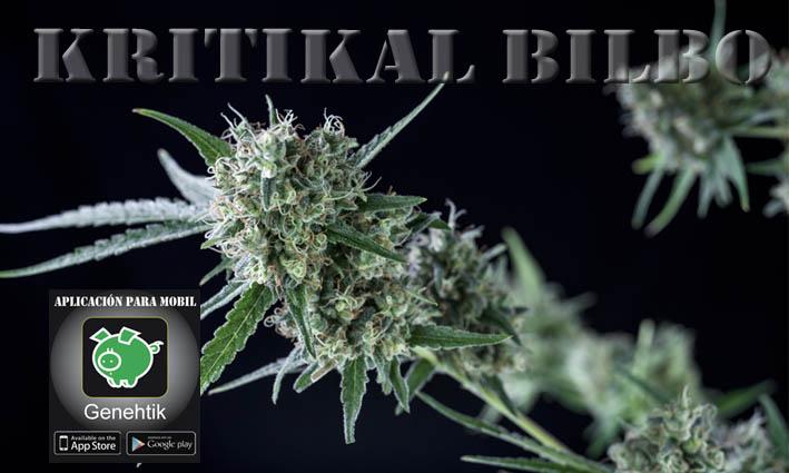 Suben las ventas de semillas de marihuana debido a su uso medicinal
