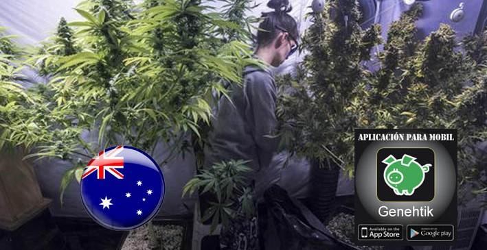 Legalizada la venta de marihuana medicinal en Australia