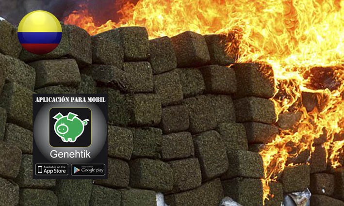 Ejército colombiano quema marihuana y coloca a media ciudad