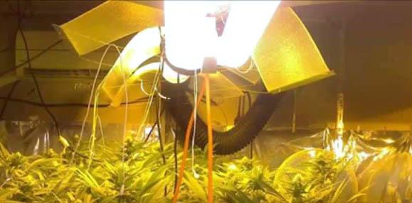 Lamparas de sodio para marihuana