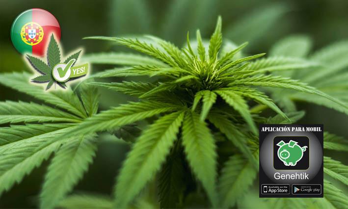 Portugal legaliza el cannabis medicinal