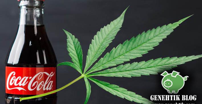 Coca-Cola estudia preparar bebidas con marihuana