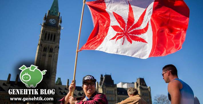 Legalización de la marihuana y su uso recreativo en Canadá
