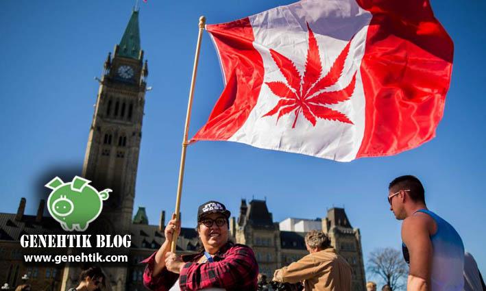 Canadá legaliza la marihuana y su uso recreativo