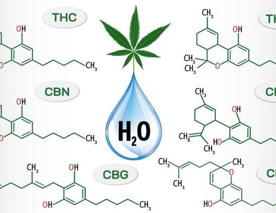 Cannabinoides solubles en agua