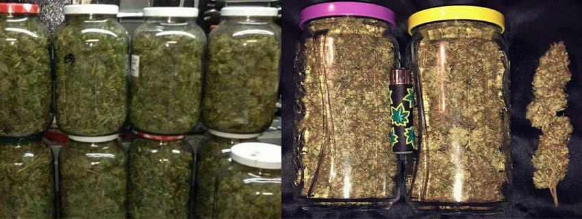 Tutorial para un correcto curado de la marihuana