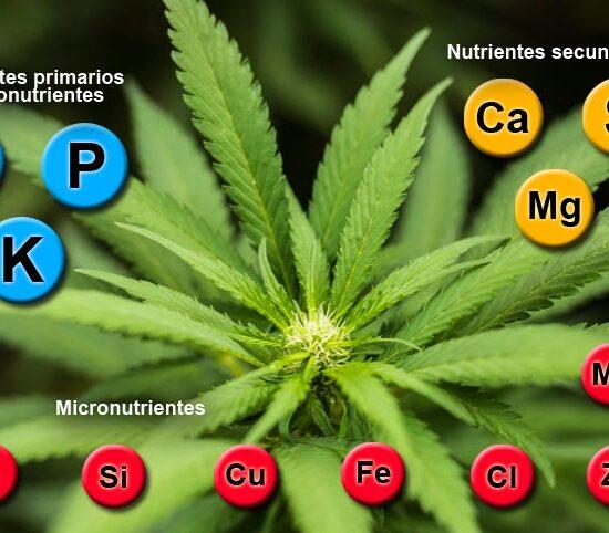Nutrientes del cannabis