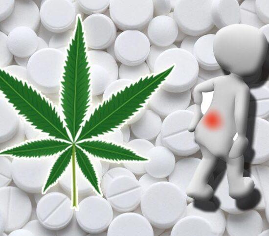 Cannabis para aliviar el dolor, 30 veces mas potente que la aspirina