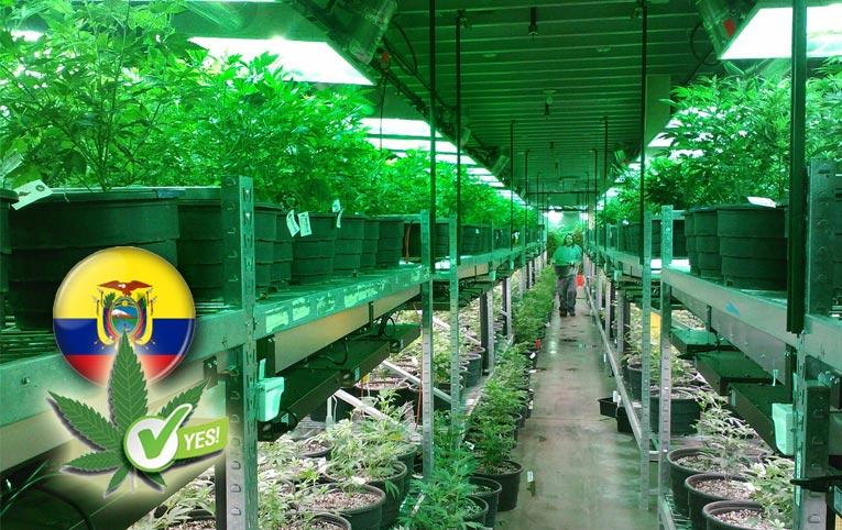 Ecuador aprueba el uso y consumo de cannabis medicinal