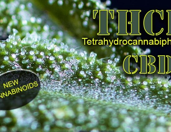 THCP y CBPD dos nuevos cannabinoides
