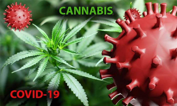 El principio activo del cannabis podría paliar efectos graves de la covid