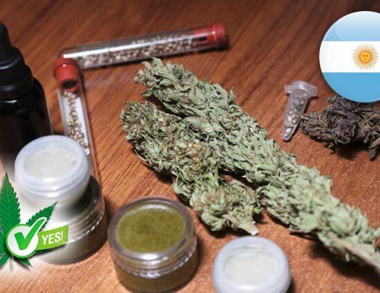 legalizado el cannabis medicinal en Argentina