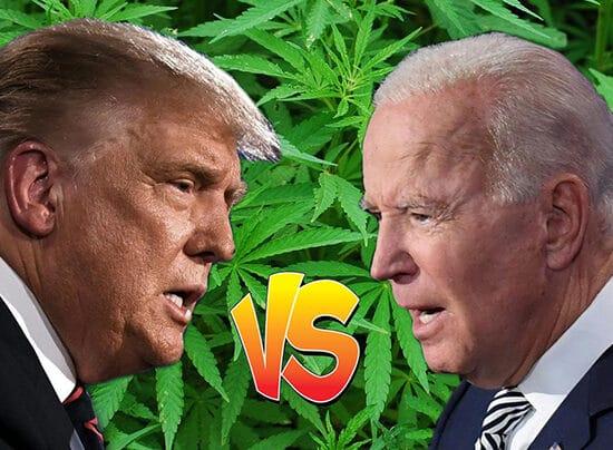 el cannabis a referendum en paralelo a las elecciones