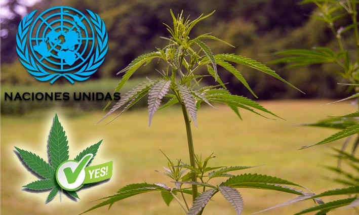 La ONU reconoce las propiedades medicinales del cannabis